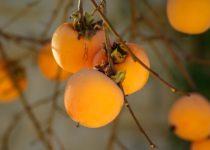fruit-1065727_960_720