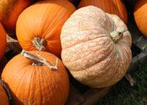 pumpkins-1712937_960_720